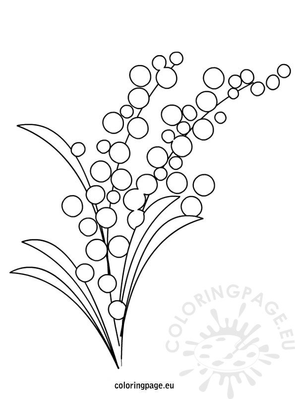 Mimosa Flower Coloring Page Coloring Page