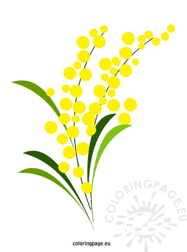 Mimosa flower | Coloring Page