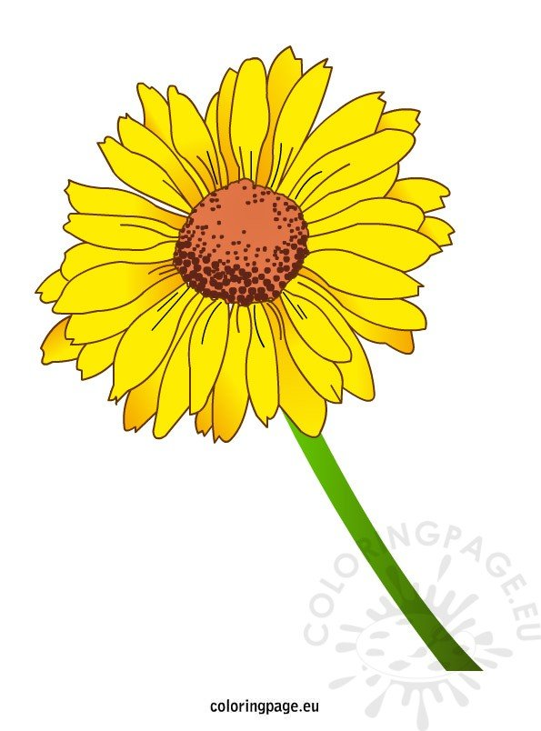 yellow-daisy-flower