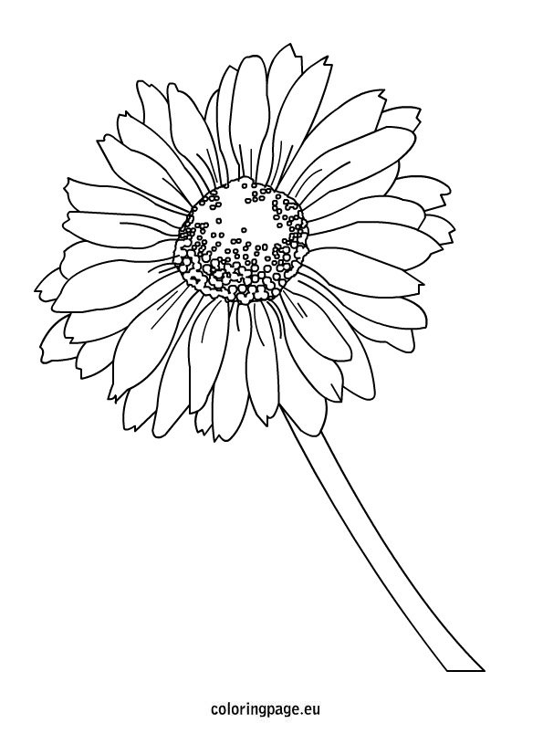 Daisy coloring page for Daisy coloring page