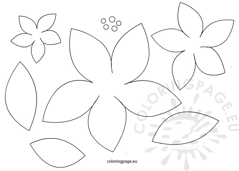 poinsettia-flowers-patterns
