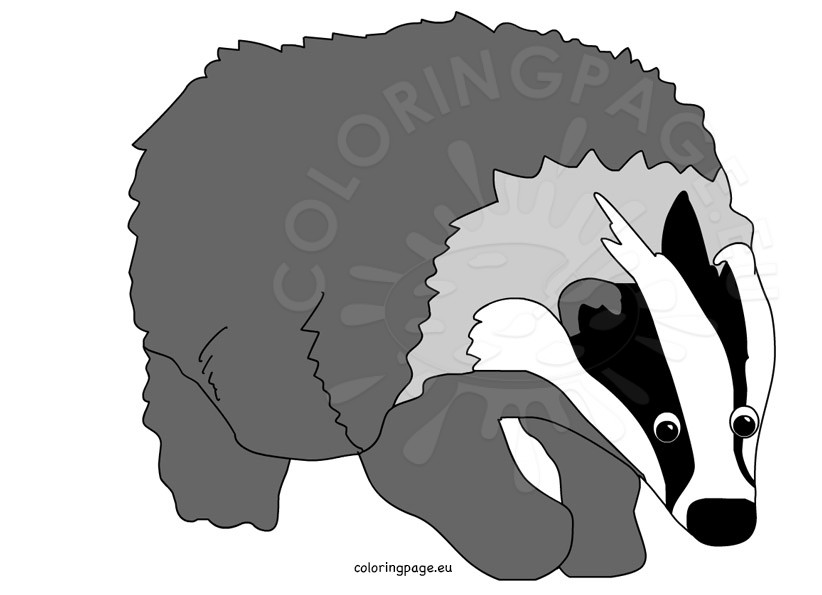 Cartoon Badger Clipart