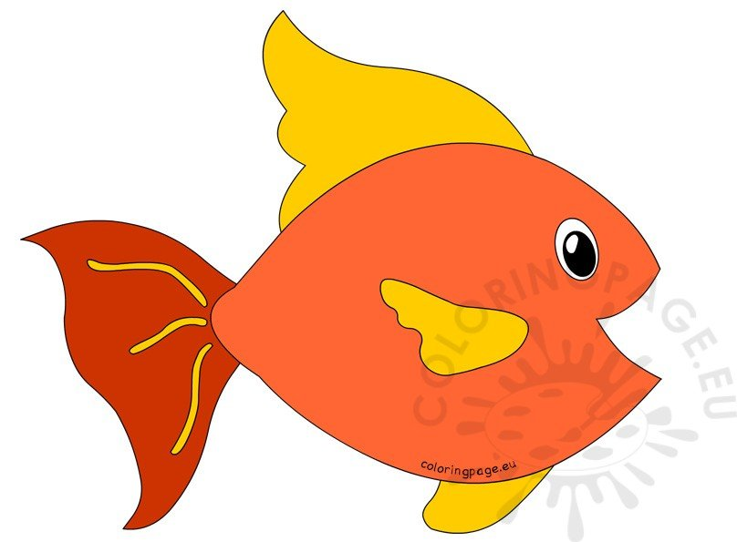 Orange and Red Big Fish