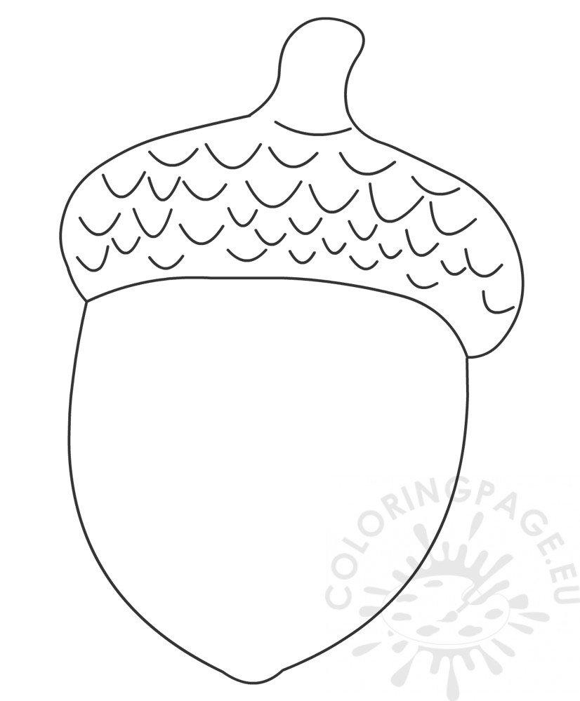acorn coloring book