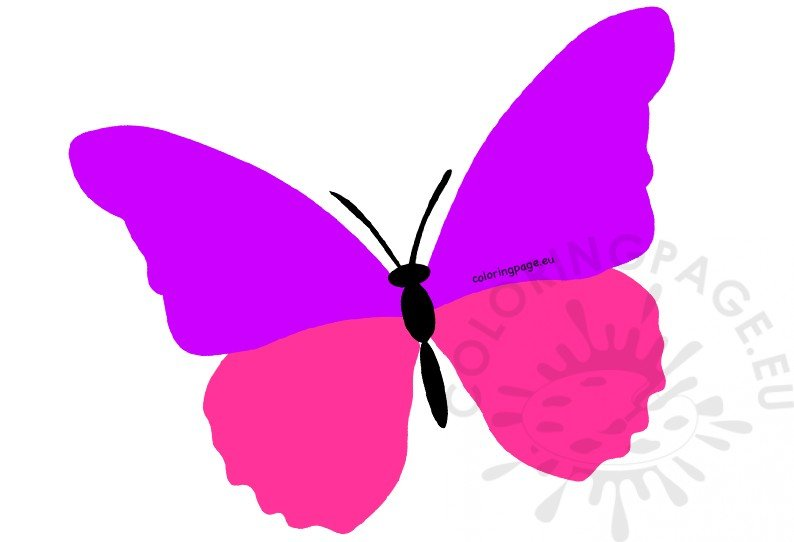 photo relating to Printable Butterfly called Higher erfly clipart printable Coloring Site