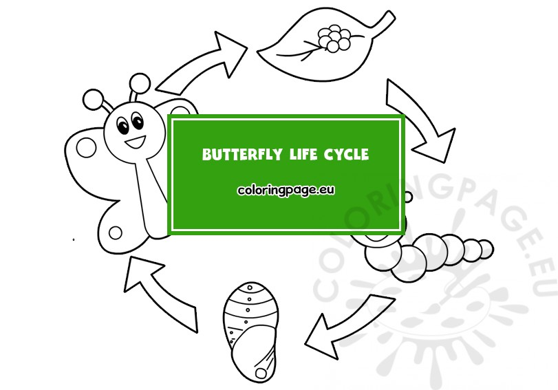 Butterfly Life Cycle Coloring Page Coloring Page