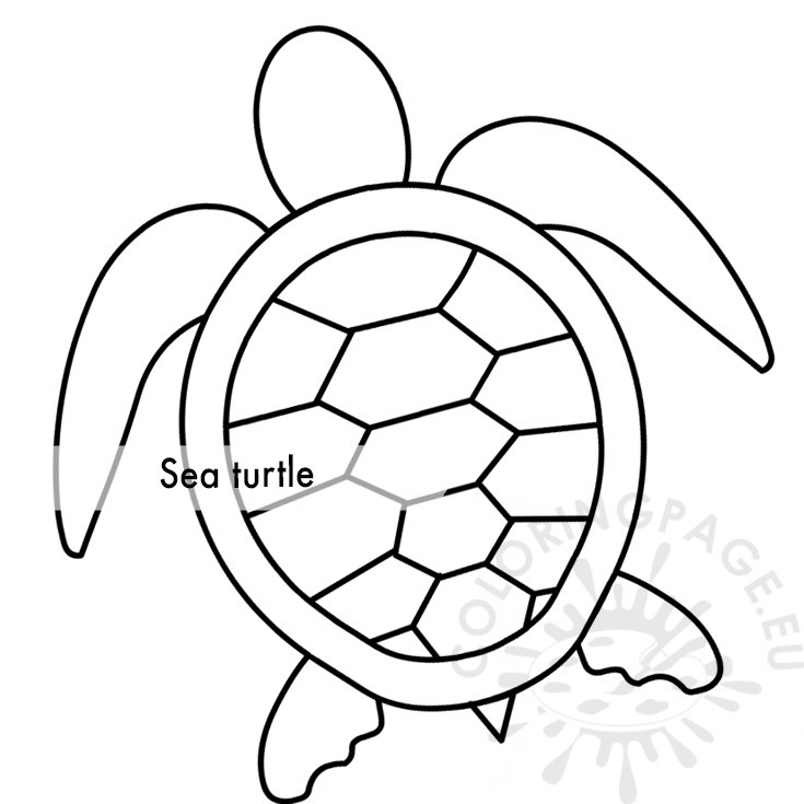 Top 20 Free Printable Turtle Coloring Pages Online | 735x735
